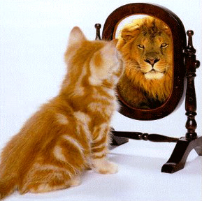 cat looking into mirror to find lion cute meme confidence